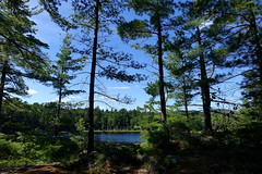Cranberry Bog Trail, Killarney Provincial Park, Ontario, Canada (alex_7719) Tags: ontario canada killarneyprovincialpark killarney lake pond water trees forest  cranberrybogtrail