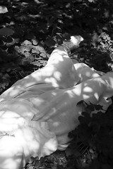 Summer Slumber (Sophie.Dituri) Tags: sleeping summer bw white black beauty forest photo slumber sophie shimmer yart photogrpah koryn dituri