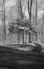 trees in winter (McMac70) Tags: badvilbel blackandwhite film film135 kodakbw400cn nikonl35af2 schwarzweis