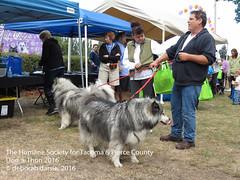 DAT2016_Crowd_1091 (greytoes_99) Tags: agility dat2015 dat2016 event humanesocietytacoma people summer tacoma tacomahs volunteers dog humananimalbond cat lakewood wa us