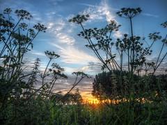 Fluitenkruid bij zonsondergang (Gerrit Veldman) Tags: fluitenkruid zonsondergang sunset hdr highdynamicrange lucht zon zonlicht avond avondlucht evening sky blue