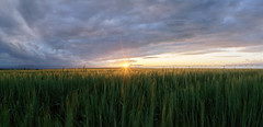 Milliken Fields Pano (kevinwenning) Tags: wenning sprinkler frontrange mountains clouds sun farming green kevinwenning sunset intentionallylostcom milliken farm colorado horizon fieldsprinkler unitedstates storm northerncolorado field