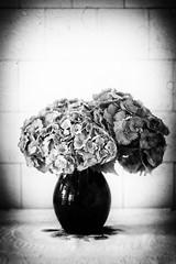 Hortensia bouquet (bess_bg) Tags: hortenzia bouquet flowers cut vase jug canna blackandwhite blackwhite stilllife stillife rustic vintage china monochrome