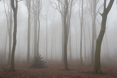A foggy morning (wiscmic) Tags: baum bäume fog forest landschaft natur nature nebel tree trees wald landscape deutschland germany laub strasse street wälder leaves