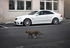 Cat and Black (Ivan_Orlov) Tags: car cars canon carphoto carinstagram carspotting color carsthatyoulike carswithoutlimits supercar supercars series exotic exclusive eos600d london love lifestyle sportcar speed 2016 auto autogespot mercedes mercedesbenz mercedesamg summer moscow monaco motorsport black blackseries clk 63 amg russia ivan orlov instagram photo photography power