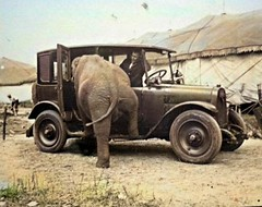 F4RTY67J (Kronos9) Tags: elephant incredible insolito retro vintage nature