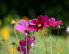 Flowers (eowina) Tags: flowers summer nature meadow
