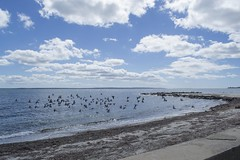 Low Flight Over the Atlantic Ocean (biesterd11) Tags: falmouth ma massachusetts capecod cape cod bird seagull flight fly water atlantic ocean clouds beach