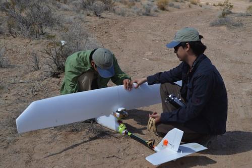 Desert Tortoise Surveys