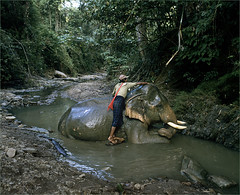 Bathtime (Keighley Bee) Tags: elephant burma myanmar oozie mahout logging forestry