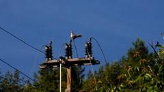 synogarlica (Darek Drapala) Tags: nature birds bird silkypix sky skyskape industrial panasonic poland polska panasonicg5