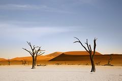 Deadsvlei (carlos.aantunes) Tags: namibia desdsvlei ssosusvlei africa desert orange tree amazing white dead valey big daddy