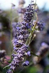 Flor Silvestre (ameliapardo) Tags: flores plantas campo naturaleza andalucia sevilla espaa