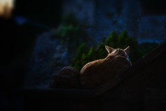 Tuscany twilight (Morag.) Tags: twilight tuscany volterra cat sunset italy nikon d3300 nikkor