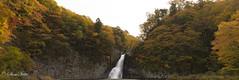 紅葉 (shin4433) Tags: 紅葉 秋 10月 japan water waterfall nikon d500 landscape