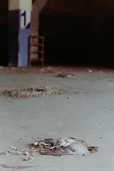 (-) 1 (laetitia.delbreil) Tags: color colour colore film pellicola pellicole istillshootfilm expiredroll kodakgold200 pentacon prakticab200 slr 35mm singlelensreflex available light availablelight prakticar50mm118 analogico argentique anlogo analogue filmphotography believeinfilm filmisnotdead filmisback filmisawesome deadbird bologna italia