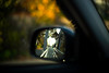 Wing Mirror (moaan) Tags: leica trip dog car japan 50mm drive dof bokeh f10 kobe jp utata mp noctilux sideviewmirror welshcorgi hyogo 2014 leicamp pochiko thelittledoglaughed leicanoctilux50mmf10 type240