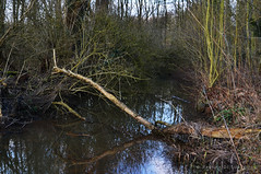 Swamps, broken trees and winter misery (Pauline Paultergeist) Tags: trees winter cold water forest moss woods mud belgium bamboo dirt swamp february humid moist