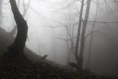 vihrovica cave steepness  (cyberjani) Tags: slovenia cave rakitna vihrovica