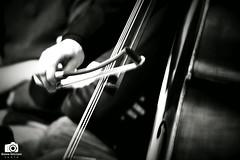 Contrabbasso (dettaglio) (simo18s) Tags: bw italy music blackwhite italia song live wb piemonte musica passion cuneo 70300 whiteblack nocolor classica contrabbasso guarene conterto d3100