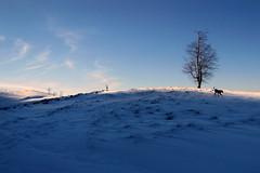 téli délután / winter afternoon (debreczeniemoke) Tags: winter dog snow mountains field forest landscape afternoon hiking kutya hegy transylvania transilvania tájkép erdély hó mező tél erdő túra délután canonpowershotsx20is gutinhegység munţiigutâi munţiigutin