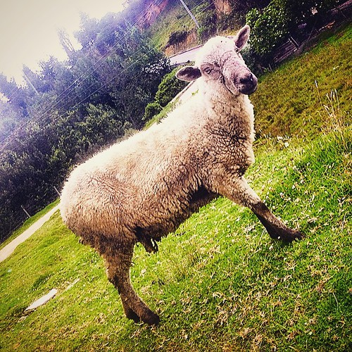 #walkingday #colombia #bogota #traveler #loves_bogota #instagood #igerscolombia #travel #igs_america #igersbogota #instalike #galeriaco #ig_colombia #ig_bogota #ig_bogota_ #bogotart #ig_mood #loves_colombia #ig_americas #ig_all_americas #igcapturesclub #s