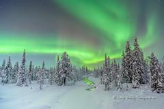 luminosity (pixellesley) Tags: trees sky snow night forest river stars nightshot sweden arctic pines aurora nightsky northernlights auroraborealis