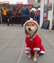 Spreading Joy+Cheer to All! (Kimberly C. Lee) Tags: santaclaus shibainu unionsquare santadog doge dogcostume christmasdog unionsquareholidaymarket nycholidaymarket