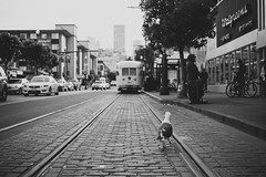 San Francisco 2014 - 005 (seango) Tags: sf sanfrancisco california ca trip vacation bw usa white black west travelling cali america coast travels nikon december pacific seagull tracks bayarea sanfran fx westcoast 2014 d600 travelphotography seango