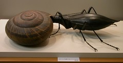 DSCN2436 model of predatory beetle, Lake Biwa Museum, Japan (johnjennings995) Tags: japan museum model beetle aquatic snails freshwater coleoptera predatory  lakebiwa waterbeetle