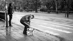 Dog Whisperer (  ) Tags: street dog crossing serbia belgrade beograd