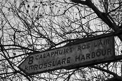 Sign of aging (tiki.thing) Tags: trees irish monochrome sign branches weathered rosslare rosslareharbour