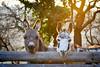 I love donkeys (nina_gaisch) Tags: sunset animal austria donkeys donkey esel steiermark styria åsna ilovestyria farmesel