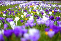 Flowers, RHS Wisley
