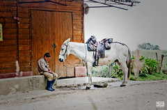 The Horse and The Cowboy (Alejita STAMPA IL DIVERSO!!! ) Tags: santa boy horses horse white cold work cowboy colombia manizales andes isabel rest hardwork nevado caldas tolima villamaria