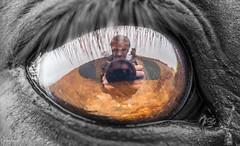 Eye of the Horse (C.A.Photogenics) Tags: bw horse macro eye