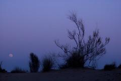 Moonrise Over Khuri (Yet Another Guy With A Camera) Tags: india night desert jaisalmer rajasthan khuri flickrscreensaver flickrscr