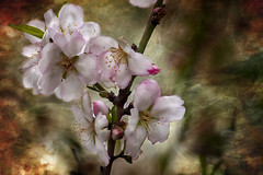 ... (Theophilos) Tags: flower nature spring