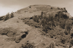 Saddle Mountain 13, 2016 (Sara J. Lynch) Tags: sara j lynch saddle mountain oregon coast range north black white asahi pentax k1000 35mm film