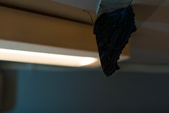 (Red_Shuheart) Tags: butterfly lamp