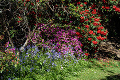 Purples, Blues and Reds (Jocey K) Tags: flowers trees newzealand christchurch bluebells spring shadows rhododendron azalea ilamgardens