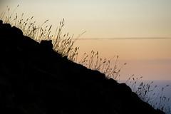 A Piece of Stromboli (kuhnmi) Tags: sunset abstract black grass silhouette dark landscape volcano twilight sonnenuntergang dusk calm gras mountainside dmmerung landschaft hang schwarz dunkel stimmung stromboli vulkan abendstimmung abenddmmerung ruhig dmmerlicht berghang