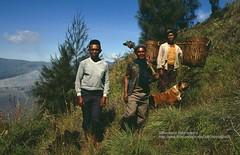 Gunung Bromo, farmers (blauepics) Tags: indonesien indonesia indonesian indonesische east java ostjava gunung bromo mount volcano vulkan mountain berg landscape landschaft farmers bauern men mnner dog hund agriculture landwirtschaft 1991