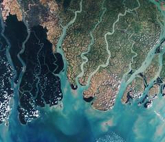 Sundarbans web (europeanspaceagency) Tags: mangrove bangladesh copernicus earthfromspace sundarbans earthobservation sentinel2a
