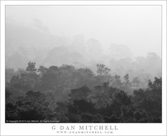 Coastal Forest, Fog (G Dan Mitchell) Tags: california park travel trees blackandwhite usa nature monochrome fog america forest point landscape haze state north reserve atmosphere coastal lobos