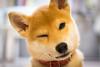 Yotsuba365 Day68 (Tetsuo41) Tags: dog shibainu yotsuba