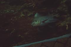 (Raquel Malln) Tags: fish water nature bioparc valencia photography raquel malln portbox animals wild sea portrait tones focu 50mm nikon light interior texture picture
