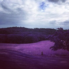 Bliss (getinfraapp) Tags: trees summer cloud tree clouds landscape ir photo purple photos hill violet hills infrared infra hilly rollinghills picoftheday landscapephotography infraredphotography