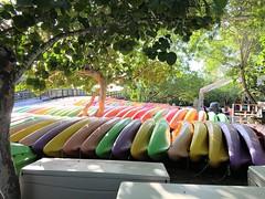 Kayaks (MyFWCmedia) Tags: kayaks fwc myfwc myfwccom wildlife florida floridafishandwildlife conservation johnpennekamp keylargo flkeys floridakeys floridastateparks johnpennekampcoralreefstatepark park pennekamp lovefl