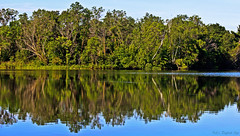 Nature's Mirror (Bob's Digital Eye) Tags: bobsdigitaleye canon canonefs55250mmf456isstm flicker flickr lake lakescape landscape outdoor reflections t3i trees water laquintaessenza